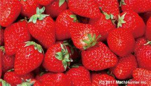 フルーツ-イチゴ(横)